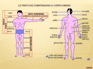 części ciała po włosku