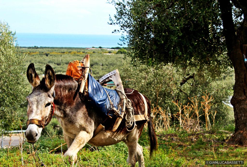 Mattinata Apulia półwysep Gargano Włochy
