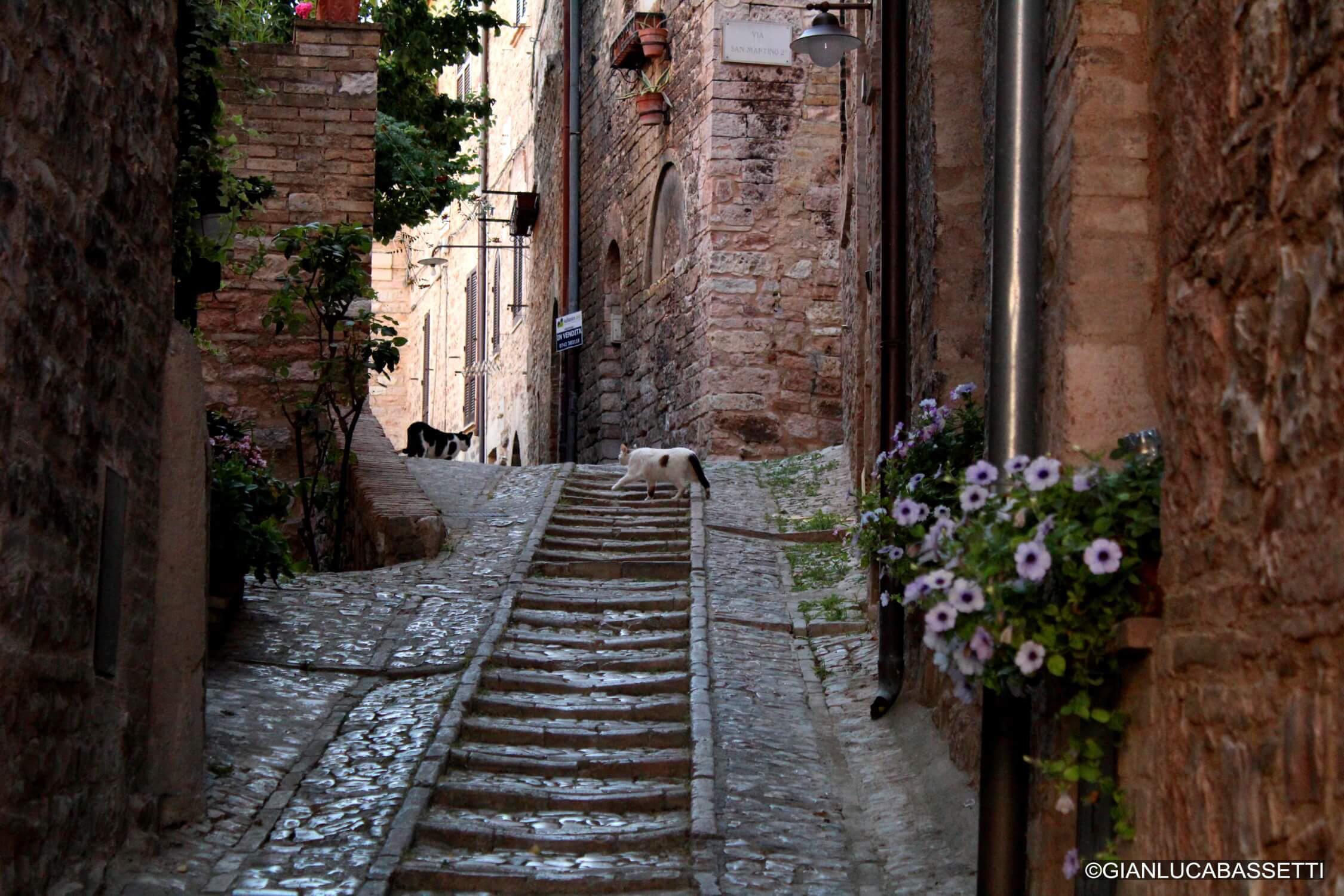 koty we włoskiej uliczce