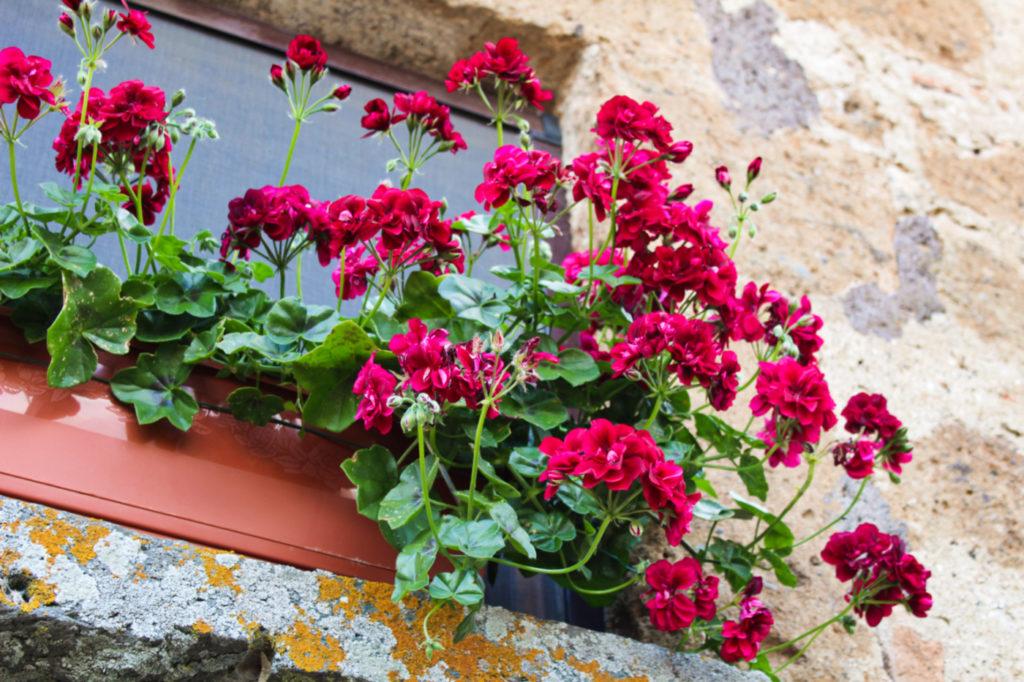 civita di bagnoregio miasto kwiatów