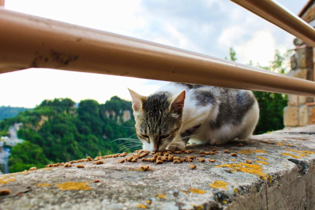 koty w civita di bagnoregio włochy